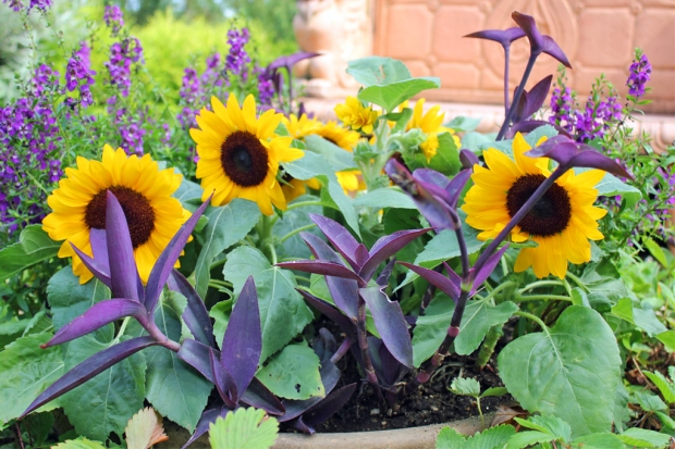 herb-garden-5