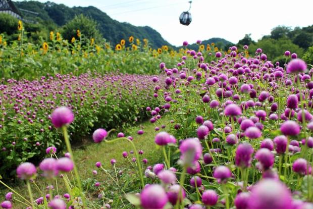 herb-garden-7